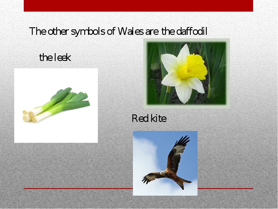 The other symbols of Wales are Red kite the daffodil the leek