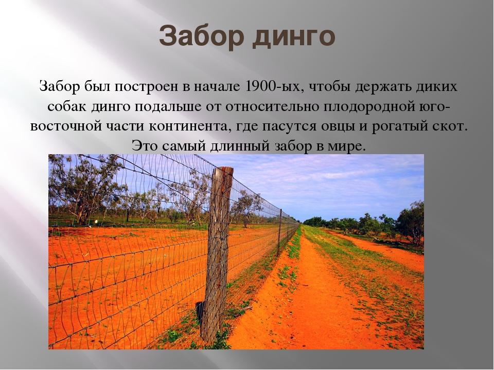 Забор динго Забор был построен в начале 1900-ых, чтобы держать диких собак ди...