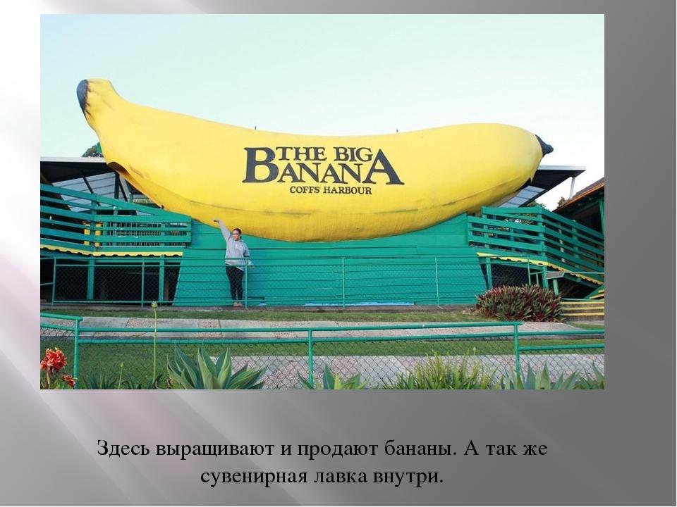 Здесь выращивают и продают бананы. А так же сувенирная лавка внутри.